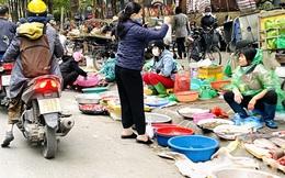 Hà Nội tái diễn 'chợ cóc' tự phát khi Tết Nguyên đán cận kề