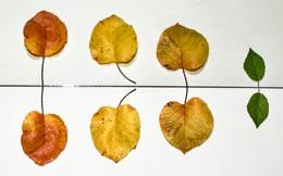 5 bài học các chuyên gia tâm lý đúc kết sau hàng thập kỷ: Bình tĩnh là trí tuệ, cách suy nghĩ và nói chuyện quyết định bạn đạt được những gì trong cuộc đời
