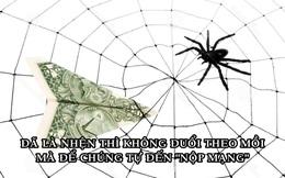 Bài học làm giàu đơn giản từ một con nhện, ai cũng nên đọc để thành công hơn