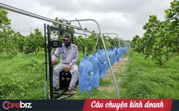 HAGL Agrico - Công ty nông nghiệp có quỹ đất lớn nhất Việt Nam còn lại gì sau khi về tay THACO?