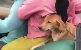 Vụ 15 con chó bị tiêu hủy tại khu cách ly gây xôn xao: Một con dương tính với virus nhưng chưa rõ là virus gì