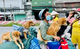 """Vụ đàn chó 15 con bị tiêu huỷ: 1 chú cún may mắn sống sót, người chủ mới khẳng định """"sẽ tặng lại vì nó là 1 phần kỷ niệm của cô chú"""""""