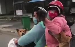 Sau vụ tiêu hủy 15 con chó, Cà Mau đã chuẩn bị lồng dành cho thú nuôi của bà con từ vùng dịch về
