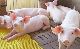 Giá heo hơi chạm đáy 2 năm, Hiệp hội Chăn nuôi đề xuất siết nhập khẩu thịt ngoại