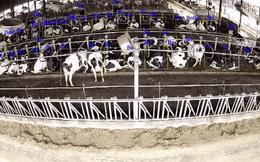 Ông Nguyễn Tử Quảng khoe công nghệ camera Bkav AI View trong nuôi bò