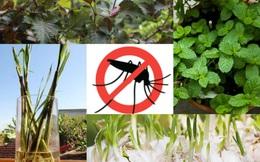8 loài cây trồng trong nhà vừa đẹp vừa thơm, giúp đuổi muỗi hiệu quả mà không cần hóa chất