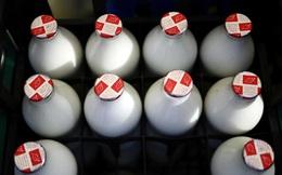 Thiếu lao động, nông dân Anh vứt bỏ hàng chục nghìn lít sữa