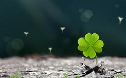 Năm mới nói chuyện về may mắn: Là tình cờ hay có cách để nó dễ 'rơi' trúng đầu bạn?