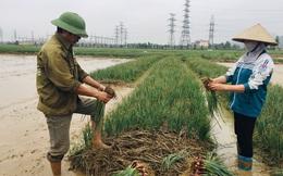 Hải Dương chỉ đạo 'giải cứu' nông sản cho nông dân sau Tết