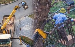 Những điều kì diệu nhỏ bé lấp lánh: Cư dân, công ty cây xanh ở Ecopark huy động xe cẩu chạy 10 km để giải cứu chú chim mắc trên cành cây