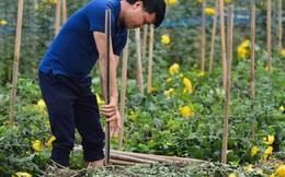 Nông dân Tây Tựu nuốt nước mắt, nhổ hoa vứt bỏ đầy đồng vì ế không bán được