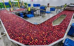 Chạy ăn cho 1,4 tỷ người, các gã khổng lồ thương mại điện tử Trung Quốc gia nhập cuộc chiến chống khủng hoảng lương thực rình rập