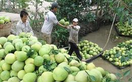 Chanh, bưởi Việt Nam sắp bay lên kệ các siêu thị New Zealand