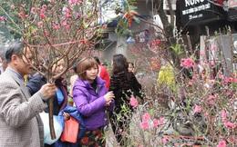 Kinh nghiệm để chọn và chăm sóc hoa đào ngày Tết
