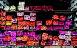Colombia: Từ trùm ma tuý đến siêu cường bán hoa, kiếm hàng trăm triệu USD dịp Valentine dù không kỷ niệm ngày này