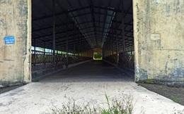 Theo sau bầu Đức, một đại gia Gia Lai gốc Bình Định sa lầy với dự án nuôi bò hơn 2.600 tỉ đồng