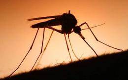 Hãy chú ý những tới những con muỗi: Nguyên tắc thành công chưa ai từng nói với bạn
