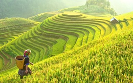 Hộ chiếu vắc xin sẽ là giải pháp 'phá băng' cho ngành du lịch Việt Nam trong thời gian tới?