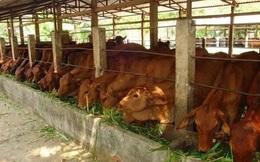 Đang sản xuất Tivi, ông chủ Asanzo bỗng đầu tư trại bò 2.000 tỷ đồng, sắp ra mắt phân bón Ba Con Bò cạnh tranh với Ba Con Cò