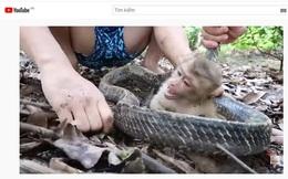 """YouTube Việt quá độc hại: Loạt kênh """"triệu sub"""" nội dung ngược đãi động vật đến mức ghê rợn, cổ vũ bạo lực mà trẻ em có khả năng mắc bẫy"""