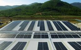Vinamilk đầu tư hệ thống năng lượng mặt trời cho tất cả các trang trại bò sữa trên cả nước