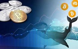 """Các nhà đầu tư """"cá mập"""" Bitcoin có khả năng thao túng thị trường thế nào?"""
