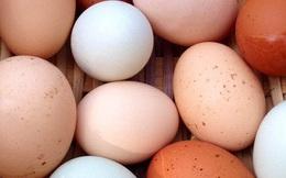 Trong thế giới trứng gà, nên mua loại nào tốt nhất: Không phải đắt tiền, đây mới là tiêu chí số 1
