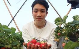 Trồng dâu trên sân thượng, nam sinh 17 tuổi Nghệ An kiếm hàng chục triệu đồng