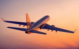 """Chó """"lạc"""" vào sân bay Cam Ranh, máy bay phải bay vòng 20 phút chờ hạ cánh"""