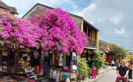 Quảng Nam thí điểm đón khách quốc tế