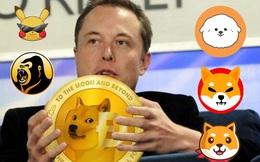 Dogecoin và cơn sốt tiền ảo hệ thú cưng
