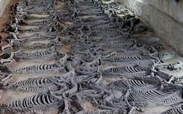Hãi hùng cách hiến tế 600 chiến mã trong lăng mộ vua Trung Hoa