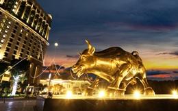 Bất ngờ hình ảnh chú bò tót vàng độc đáo vừa xuất hiện tại Hạ Long