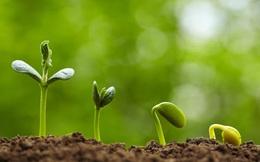 Tự sự của một người trồng rau mầm và bài học thấm: Đừng vội nhìn vào thành tựu của người khác mà nghĩ rằng mình thất bại!