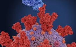 Những hiểu nhầm về biến thể virus ở Ấn Độ