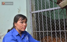 Người phụ nữ 20 năm chăm sóc mãnh thú ở Hà Nội: Lúc rảnh ngồi chải bờm, bắt rận cho sư tử, có lần bị hổ cắn thâm người