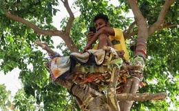 Trong cái khó, ló cái khôn: Mắc COVID-19, 1 nam sinh ở vùng quê nghèo Ấn Độ tự cách ly... trên cây
