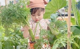 Vườn rau trong thùng xốp với đủ loại cây trái của mẹ 9x trồng cho con thưởng thức ở Buôn Ma Thuột