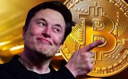 """Sau 1 tuần """"tắm máu"""", Bitcoin hồi phục nhưng Elon Musk đã """"hết thiêng""""?"""
