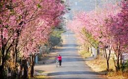 7 cung đường bộ đẹp nhất Việt Nam xuất hiện trên Tạp chí du lịch danh tiếng thế giới: Ngắm cảnh còn ngỡ lạc vào động tiên