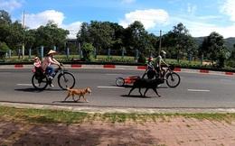 Bán hết tài sản, cặp vợ chồng Vũng Tàu đạp xe chở 2 con nhỏ đi phượt khắp Việt Nam