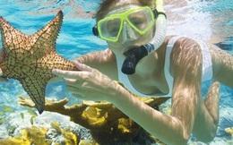 Mùa hè vẫy vùng cùng những điểm lặn ngắm san hô đẹp nhất Việt Nam: Du ngoạn vào thế giới sinh vật biển kỳ thú và lộng lẫy