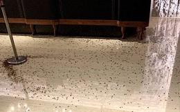 Giang hồ áo đen ném cả nghìn con gián vào nhà hàng, đúng lúc cảnh sát đang ăn tiệc mừng sếp lớn nghỉ hưu