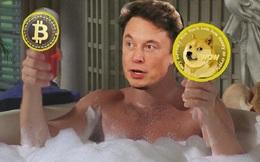 Elon Musk thích thú ý tưởng bồn tắm nước nóng kiêm máy đào Dogecoin, hy vọng giải cứu cho bong bóng sắp vỡ