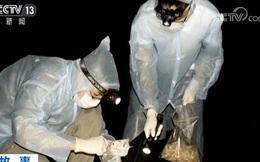 Lộ bằng chứng về việc Viện Virus học Vũ Hán nuôi dơi làm thí nghiệm: Mỹ nghi điều tra viên WHO bao che