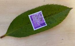 Dịch vụ bưu chính đỉnh cao của Nhật Bản: Một chiếc lá được dán tem, vận chuyển nguyên vẹn tới tay người nhận