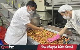 Vải thiều Bắc Giang – từ nông trại đến siêu thị Nhật: Phải đủ 10 bước xử lý – bảo quản từ lúc thu hoạch đến nằm ở quầy kệ, dưới sự giám sát nghiêm ngặt của VIAEP