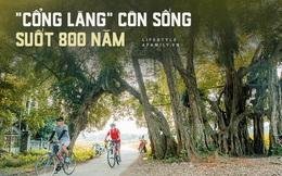 """Ngôi làng độc nhất Việt Nam sở hữu """"CHIẾC CỔNG"""" CÒN SỐNG SUỐT 800 NĂM, được công nhận là di sản và là bối cảnh của không biết bao nhiêu bộ phim đình đám"""
