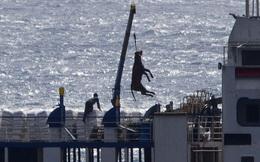1.800 con bò bị bỏ đói trên biển và chịu kết cục thảm: Hồi chuông cảnh tỉnh về ngành công nghiệp buôn động vật sống quy mô 18 tỷ USD