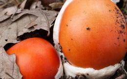 """""""Trứng gà ngoi lên từ lòng đất"""": Của ngon, hiếm có khó tìm, giá nửa triệu đồng/kg"""
